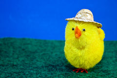 Chick in Hat royalty free stock image