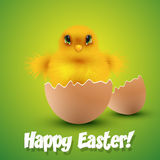 Chick hatching form an egg Easter card Royalty Free Stock Image