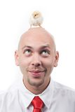 Chick on head. Portrait of cheerful man with cute yellow chick on his bald head Royalty Free Stock Images