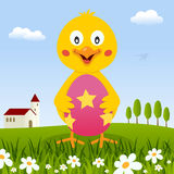 Chick Holding a Easter Egg in a Meadow Stock Image