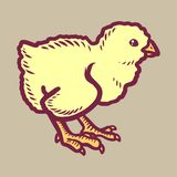 Chick icon, hand drawn style royalty free illustration