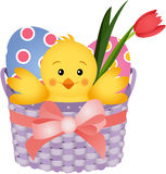 Chick Inside an Easter Basket Stock Photo