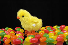 Chick and jelly beans. A yellow toy chicken stands among colorful jelly beans.  The background is black Stock Photos
