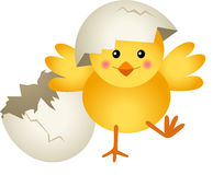 Chick Leaving Cracked Egg Royalty Free Stock Photography