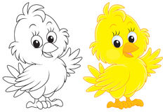Chick. Little yellow chick, color and black-and-white outline illustrations on a white background vector illustration