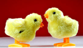 Chick love Royalty Free Stock Photos