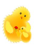 Chick love Royalty Free Stock Photography