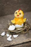 Chick  in a nest Royalty Free Stock Image