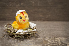 Chick  in a nest Stock Images