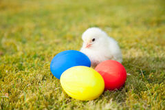 Chick next to colorful easter eggs Royalty Free Stock Photography