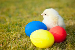 Chick next to colorful easter eggs Stock Photos