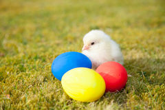 Chick next to colorful easter eggs Stock Image