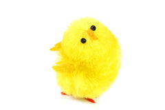 Chick over white Stock Photography