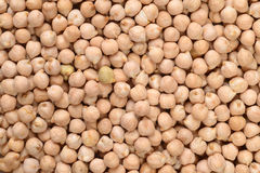Free Chick Pea Background Royalty Free Stock Photography - 51444817