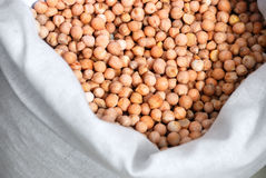 Chick pea crop in a bag Stock Image