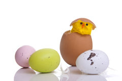 Chick popping out of egg with feathers around it Royalty Free Stock Image