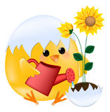 Chick with sunflowers Royalty Free Stock Images