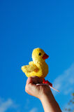 Chick toy in hand Royalty Free Stock Photo