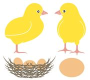 Chick. Vector illustration (EPS 10 vector illustration