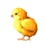 Chick. Watercolor illustration Stock Photography