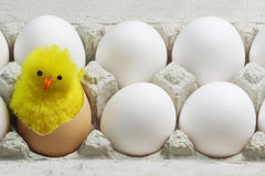 Chick Between White Eggs Royalty Free Stock Photos