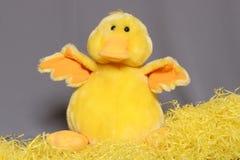 chick Wielkanoc Zdjęcia Royalty Free