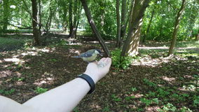 Chickadee на руке Стоковые Изображения