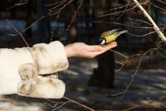Chickadee atterrissant au bras des femmes Photographie stock