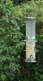 Chickadee au câble d'alimentation d'oiseau Photographie stock libre de droits