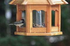 Chickadee on bird feeder Stock Image
