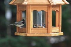 Chickadee on bird feeder Stock Image
