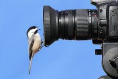 Chickadee On A Camera royalty free stock photos