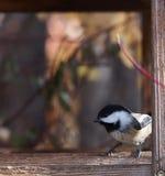 Chickadee couvert par noir sur Birdfeeder Images stock