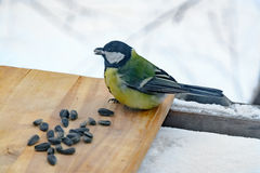 Chickadee eats sunflower seeds in the feeder in winter Stock Photos