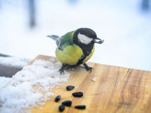 Chickadee eats sunflower seeds in the feeder in winter Stock Images
