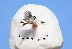 Chickadee en un hombre de la nieve imagenes de archivo