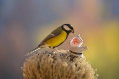 Chickadee houdt een zonnebloemzaad in zijn bek en Kerstman Royalty-vrije Stock Afbeelding