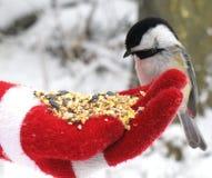 chickadee karmienia Zdjęcie Royalty Free