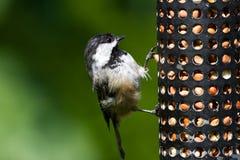 Chickadee- och fågelförlagematare Arkivfoton