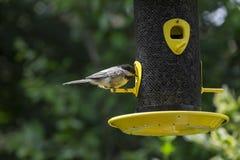 Chickadee på en fågelförlagematare Arkivbilder