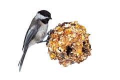 Chickadeen sörjer kotte- & jordnötsmör royaltyfri fotografi
