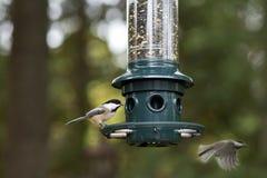 Chickadees en el alimentador Fotografía de archivo