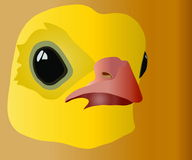 Chicken. Image of head of little, fluffy, big-eyed chicken Stock Illustration