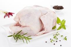 Chicken. Stock Image