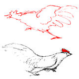 Chicken. I draw with a black pen,  Vector Royalty Free Stock Photo
