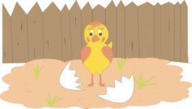 Chicken. The hatching chicken near a shell stock illustration