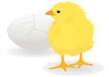 Chicken. Illustration of a chicken over cracked egg Royalty Free Stock Photos