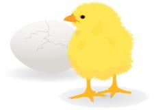 Chicken. Illustration of a chicken over cracked egg stock illustration