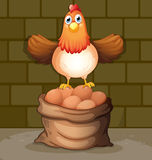 A chicken above a sack full of eggs Stock Images