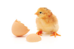 Chicken And An Egg Shell Royalty Free Stock Photography